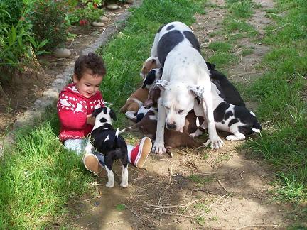 El APBT es capaz de adoptar a un niñopequeño como a uno más de su ...