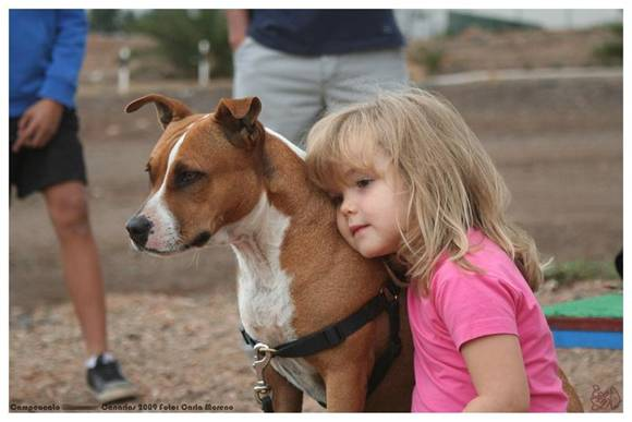 THE CHARACTER OF THE AMERICAN PIT BULL TERRIER