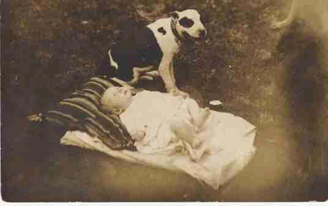 old-pit-bull-and-baby-picture[1]