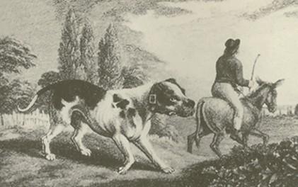 origins of american pit bull terrier